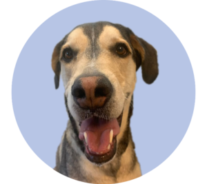 The Dog Behind Pawfee Pups